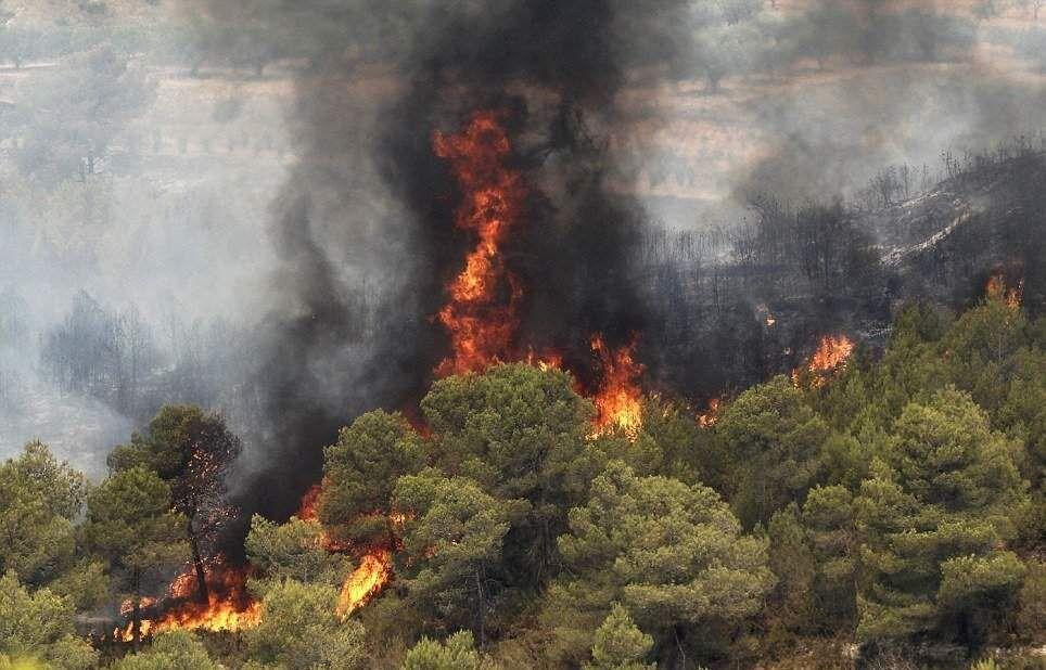 تعداد حریق منابع طبیعی امسال ۱۰ درصد افزایش یافت