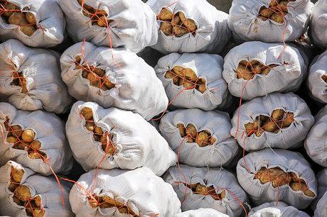 جدیدترین اقدام برای کنترل قیمت                                 صادرات سیبزمینی مشمول پرداخت عوارض صادراتی شد