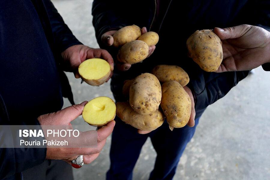 کارگر:                                 قیمت منطقی سیبزمینی ۲۵۰۰ تا ۴۰۰۰ تومان است
