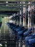 25 درصد نیاز لاستیک کشور در اردبیل تولید می شود