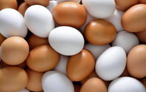 تخم مرغ هایی از جنس طلا !!
