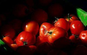 (قیمت گوجه فرنگی رکورد شکست !! / طلای قرمز!!