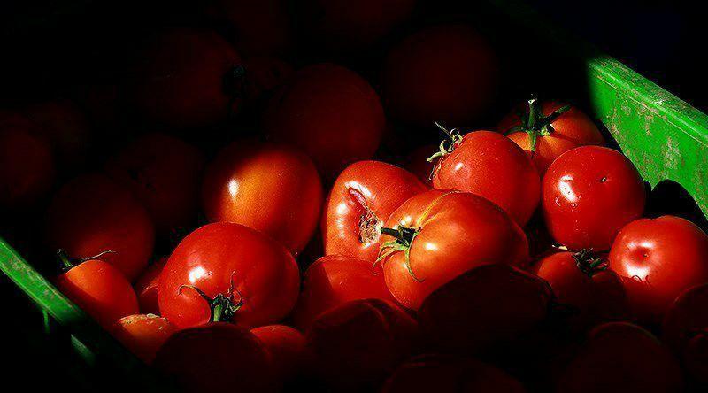 قیمت هر کیلوگرم گوجه فرنگی