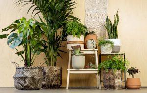 گیاهان آپارتمانی مناسب برای اجاره نشینان