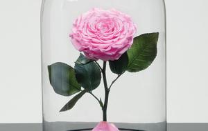 آیا گل رز جاودان هدیهای جاودانه است؟ از شایعه تا واقعیت