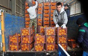 (تامین میوه شب عید؛ قیمت ها کاهش مییابد