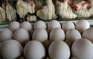 آیا بازار مرغ و تخم مرغ در سال ۱۴۰۰ سامان مییابد؟