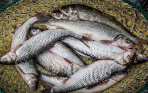 (افزایش قیمت مرغ،عامل تعادل قیمت ماهی در بازار
